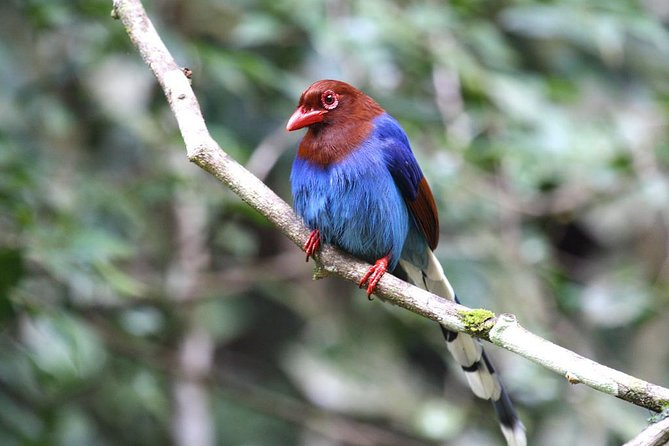 Private Day Tour: Sinharaja Rainforest Bird Hike Tour photo 1