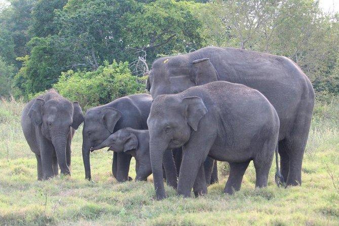 Wildlife and World Heritage Tour from Hikkaduwa (2 Days)