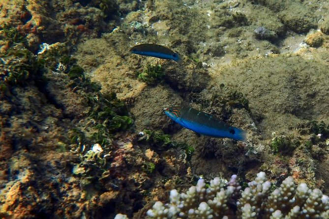 Snorkeling at Pigeon Island, Trincomalee photo 2