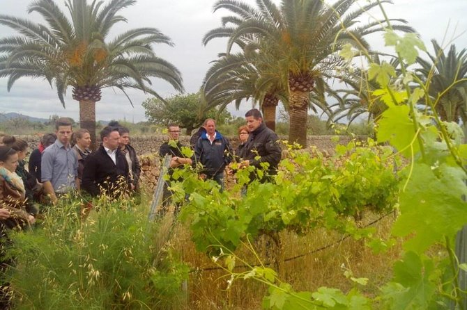 Mallorca Half Day Private Wine Tour with Wine Tasting