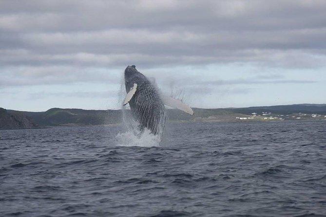 Whale Watching Marine Wildlife Excursion by Kayak
