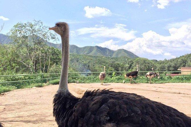 Private Transfer between Badaling Wildlife Park and Beijing City Hotel