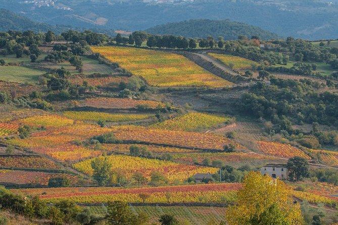 Montepulciano, Nobile Wine Tour