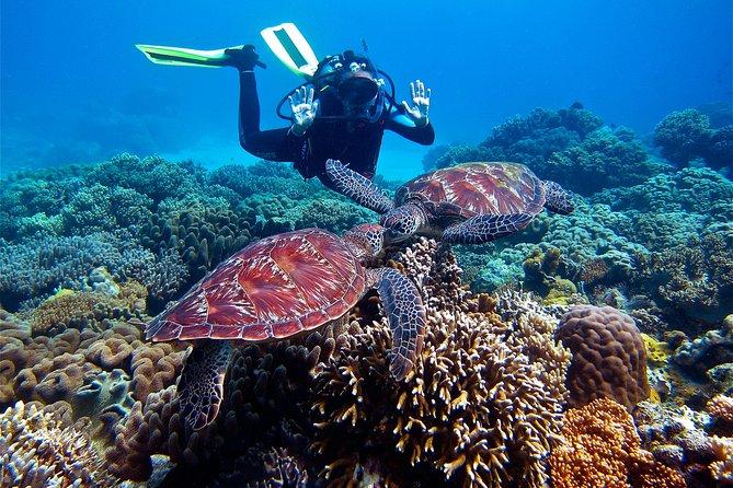 Diving in Kubu