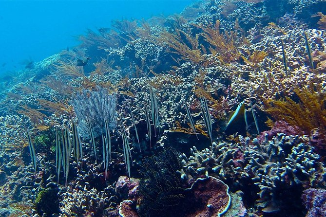 Diving at Rama Reef