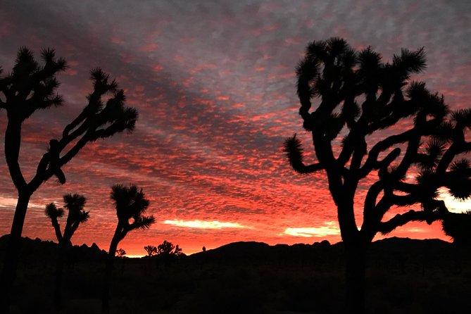 Joshua Tree Sunsets