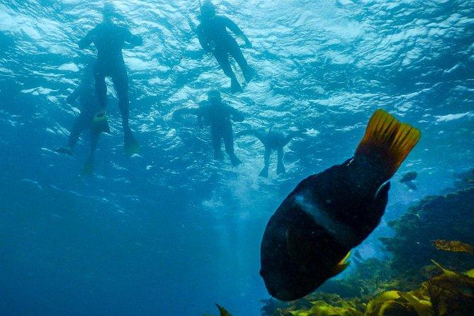 Dolphin Cruise, Seal Swim and Reef Snorkel Adventure, Mornington Peninsula