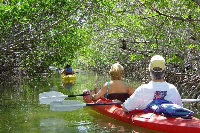 Key West Mangrove Kayak Eco Tour photo 1