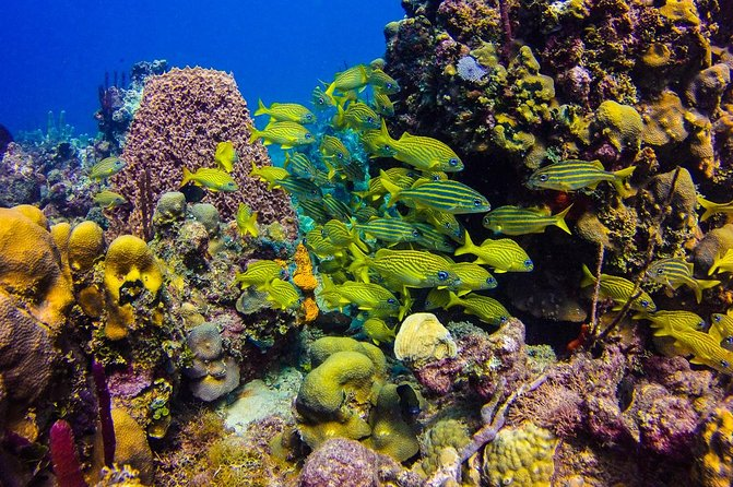 Full-Day Catalina Island Scuba Diving Tour from Punta Cana photo 1