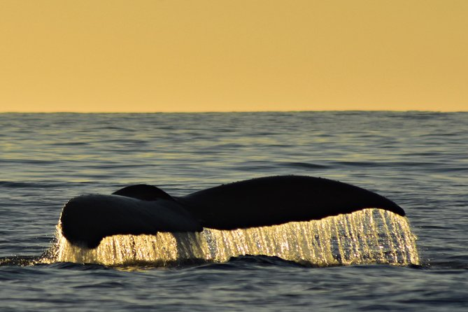 Sunset Whale Cruise in Cabo San Lucas