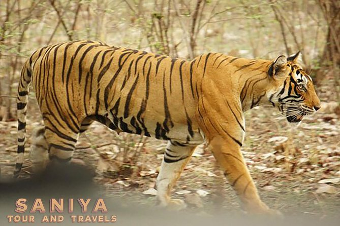 Royal Rajasthan Tour With Ranthambore National Park