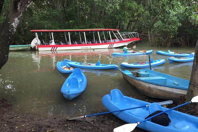 Kayak in the Mangroves of Damas from Manuel Antonio photo 3