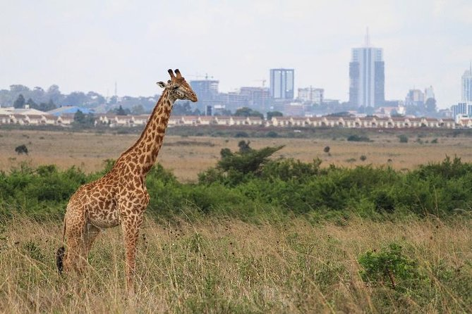 Day Tour at Nairobi National Park elephant orphanage, giraffe cent karen museum