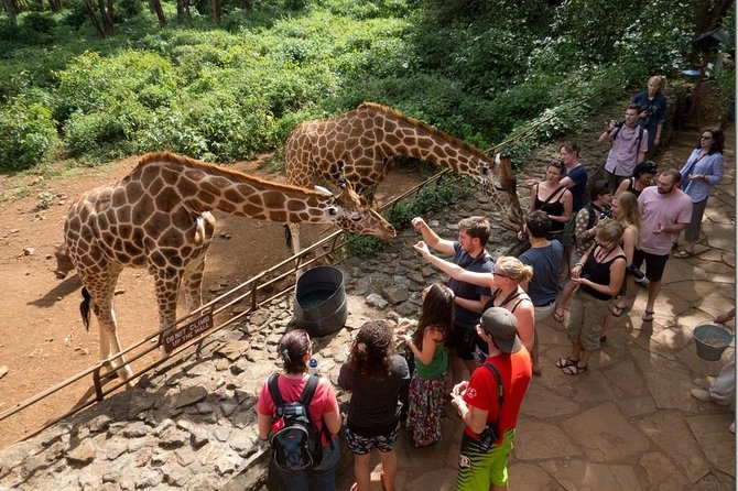 Nairobi Half-Day Tour in a Museum, Elephant Orphanage and Giraffe Center