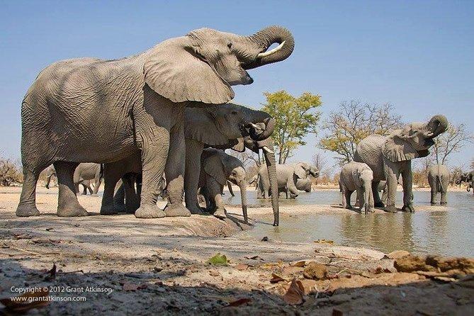 2-Day Amboseli National Park Safari from Nairobi - free airport pick up