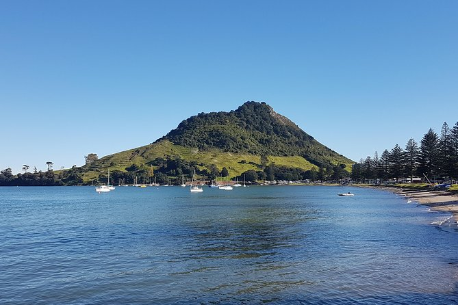 Half Day Small-Group Tauranga Scenic Tour FREE Kiwifruit icecream and tastings.