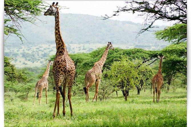 2 Days Short Safaris- - Lake Manyara Or Tarangire and Ngorongoro Crater