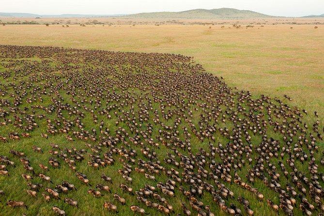 10-Day Tanzania Wildlife Safari from Arusha