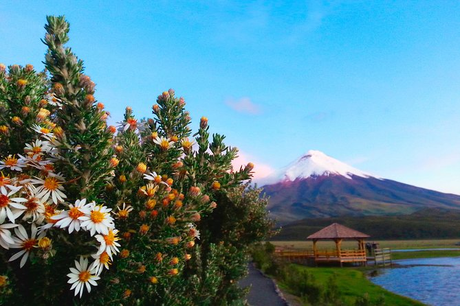 Cotopaxi full day tour from Quito with snack, small groups