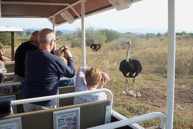 Skip the Line: Safari Ostrich Farm Tractor Tour Ticket in Oudtshoorn