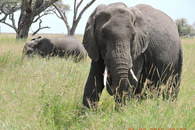 Serengeti 2-Day Safari from Mwanza
