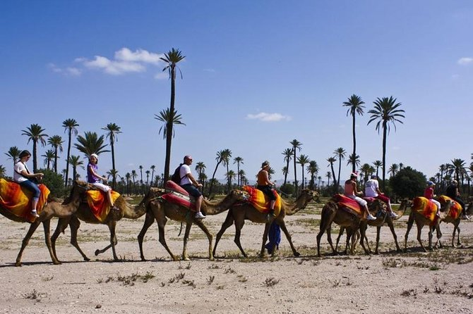 Marrakech Palmeraie Palm Groves and Desert Camel Ride photo 3