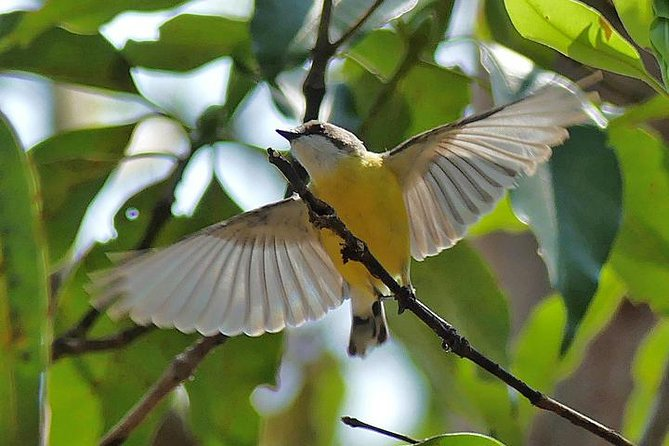 Birdwatching and Wildlife Noosa Biosphere Full-Day Experience