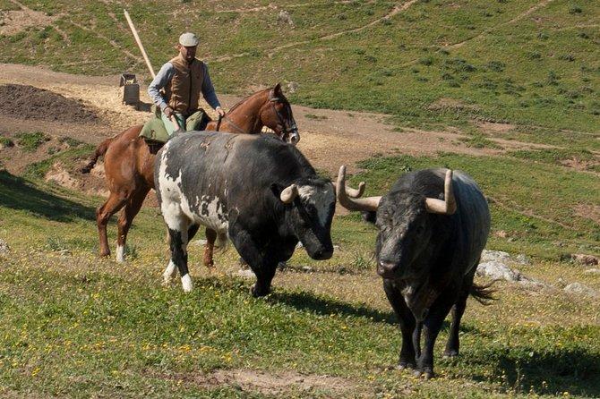 Brave Bulls Farm Visit in Cordoba