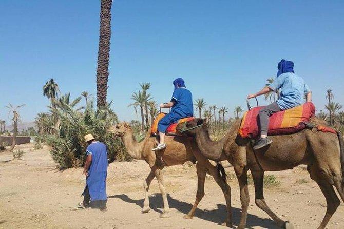 Camel Ride in Marrakech Including Moroccan Tea and Snacks