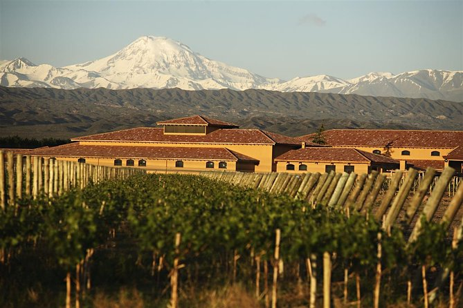 Wine Tour with Lunch from Mendoza