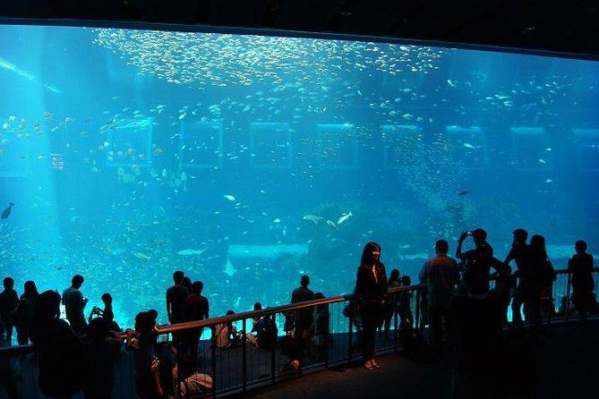 Sentosa Island With S E A Aquarium