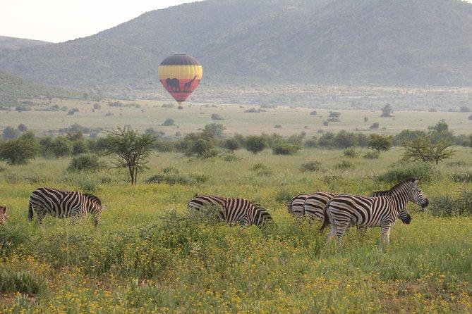 Ballooning in the wild! Pilanesberg National Park