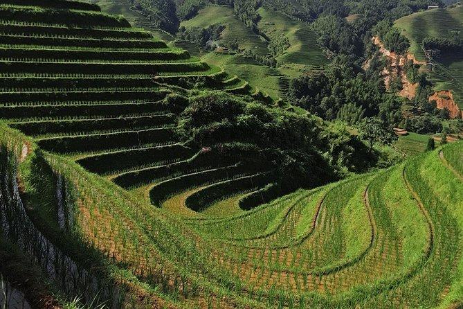 Private Custom Tour: 2 days Longji rice terraces private tour