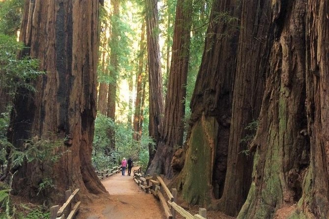 Private San Francisco Tour with Muir Woods and Sausalito By SUV