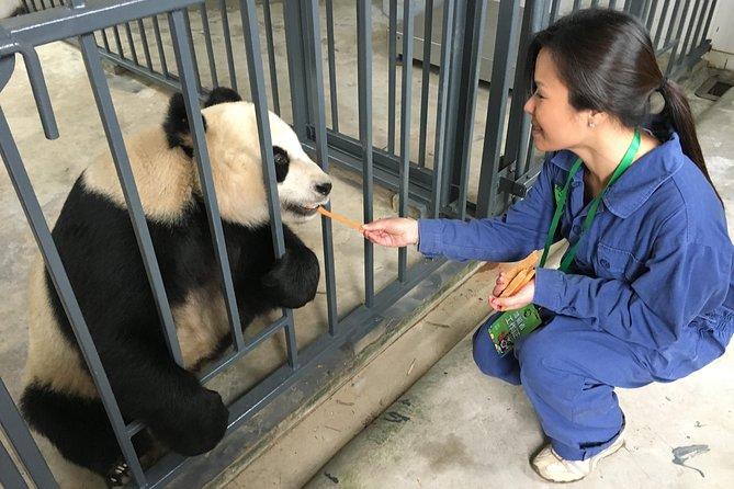 Dujiangyan Panda Base with Optional Panda Feeding Including Lunch