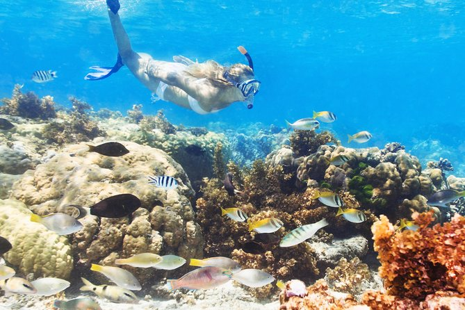 Catalina Island and Snorkeling Day Trip