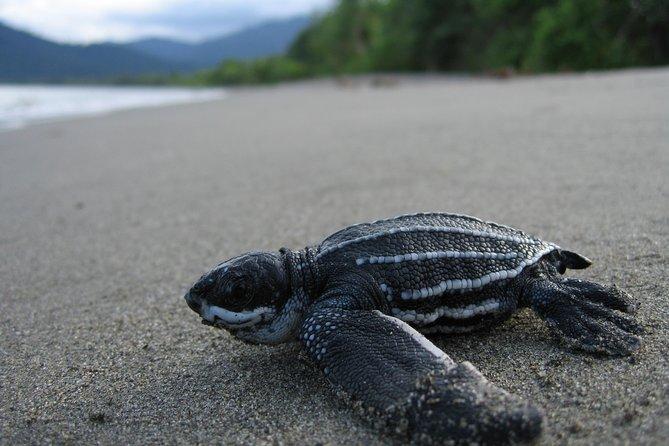 Turtle Watching Adventure in Trinidad