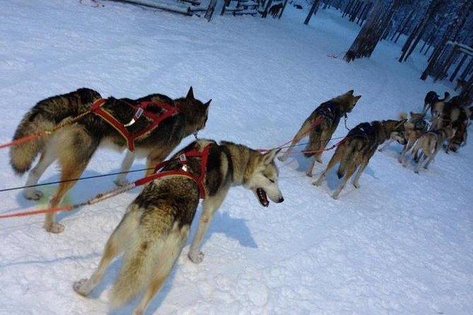 Ruka Snowmobile Adventure med Husky Farm Visit och Husky Sled Ride