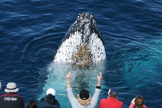 Whale Watching Tour in Gold Coast