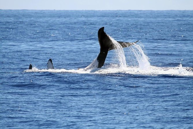 Full Day Whale Watching Tour in Hermanus