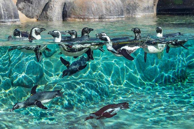 Cheetah,Penguin,Wine tour via Whale Route Private tour