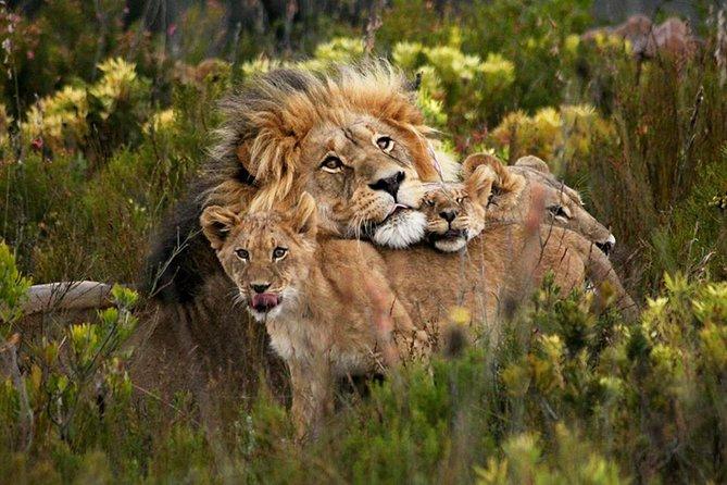 Big 5 Aquila Safari Tour including Private Transportation