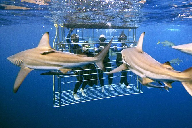 Shark Cage Diving Tour Helderberg and Grabouw including Private Transportation