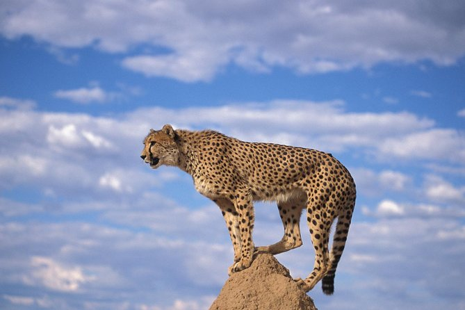 Cheetah,Penguin colony, Wine tour via Whale Route Including Pickup and dropoff