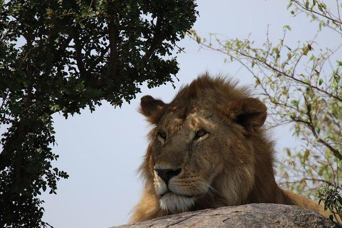 5 Days Amazing Wildlife Safari