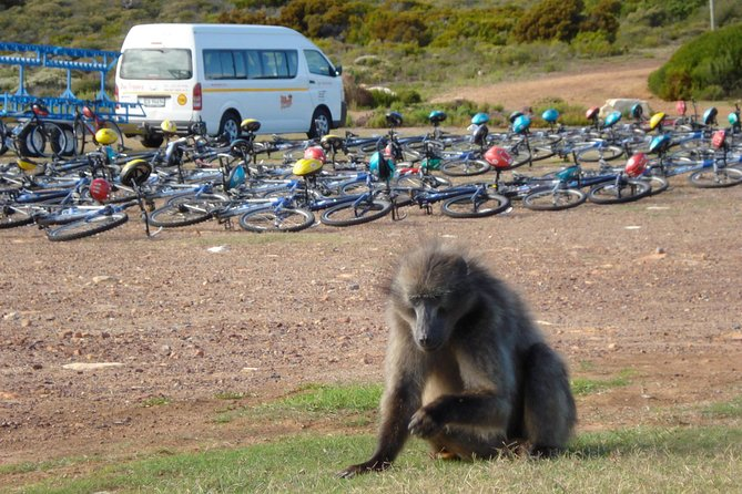 Full Day Cape Point and Peninsula Tour with EBikes photo 3
