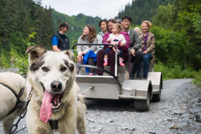 Wilderness Dog Sled Ride and Tour