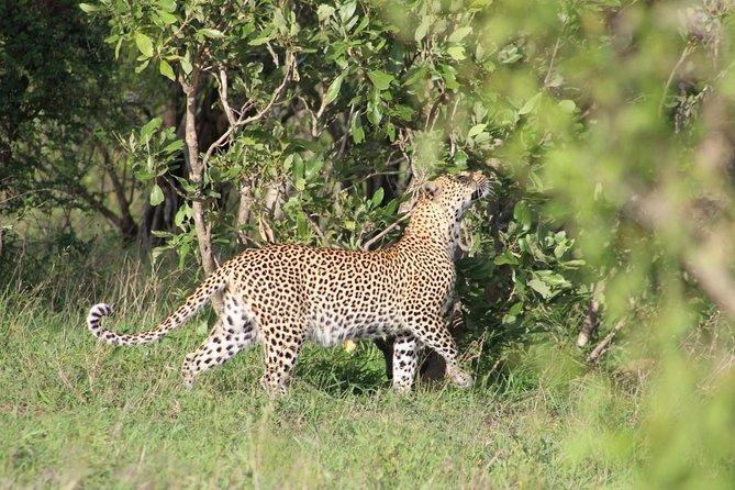 4 Day Safari to Kruger National Park from Johannesburg