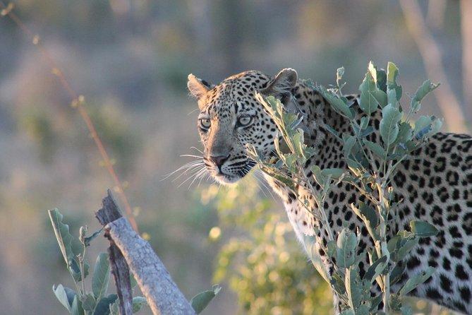 1night 2days Express Kruger National Park Safaris