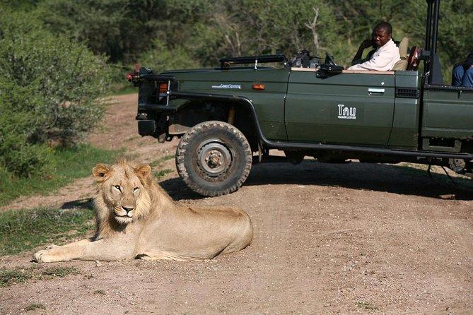 3nights-4days Tau Game Lodge-Madikwe Game Reserve from Johannesburg or Pretoria